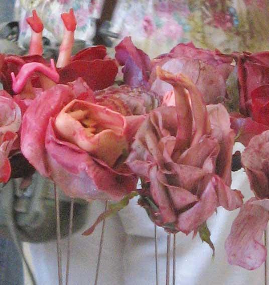 Raum f r pflanzen 18 mal rose for Raum pflanzen